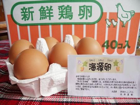 海源卵(かいげんらん)