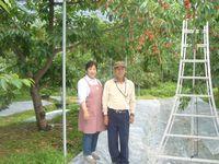 生産者の生産者の吉田果樹園